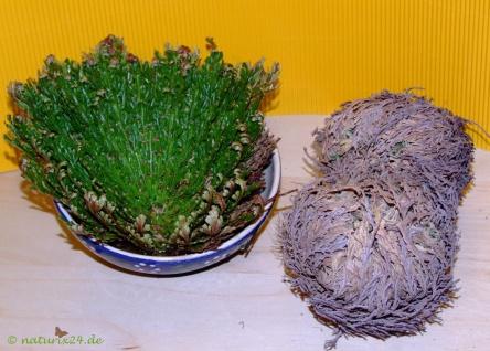 Naturix24 Rose von Jericho ganz 1 Pflanze 40 g