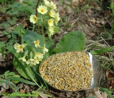 Naturix24 Schlüsselblumenblüten mit Kelch geschnitten 100 g