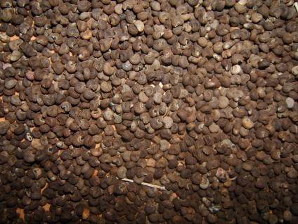 Naturix24 Abelmoschussamen ganz 1 kg