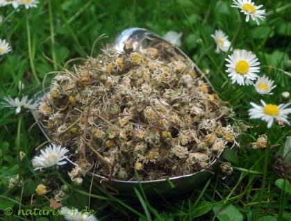 Naturix24 Gänseblümchen ganz 1 kg