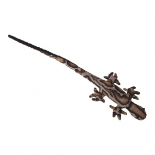 Sandtier Gecko Langschwanz - Vorschau 2