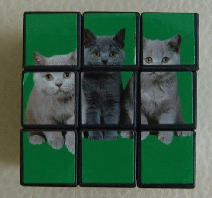 Katzen - Würfel zum Knobeln - Vorschau 5