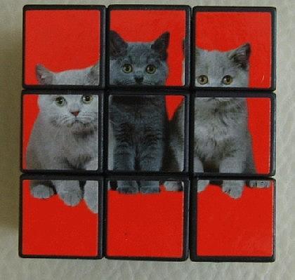Katzen - Würfel zum Knobeln - Vorschau 4