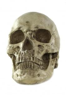 Halloween Totenschädel Totenkopf menschlicher Schädel Skull Gerippe VQ-057