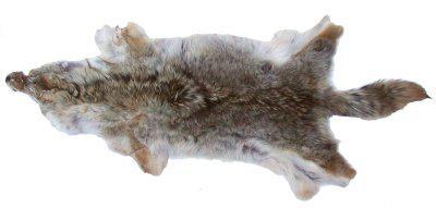 großes Wildfell, nordamerikanisches Fell vom Coyoten, Coyotenfell, ca. 95-125 cm