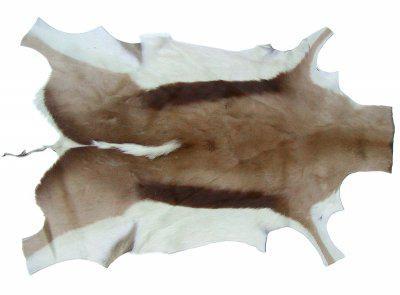 interessantes Wildfell, afrikanisches Springbockfell, tolles Dekorationsfell, ca. 100x60 cm