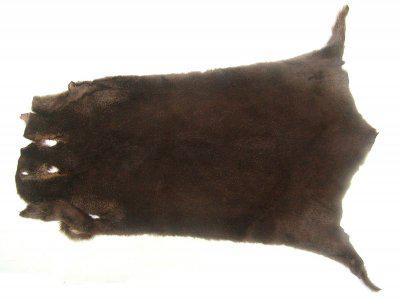 weiches Nutriafell sepiabraun gefärbt für Bekleidung, Fellkragen, Pelzmanschetten, ca. 45 cm lang, 27 cm breit
