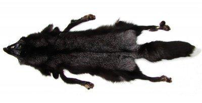 interessantes Wildfell, Silberfuchs Fell mit Schweif, Fell vom Schwarzsilber Fuchs, ca. 80x30 cm