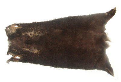 weiches Nutriafell terrabraun gefärbt für Bekleidung, Fellkragen, Pelzmanschetten, ca. 45 cm lang, 27 cm breit