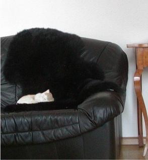 australische Lammfelle schwarz gefärbt waschbar, Haarlänge ca. 70 mm, ca. 100...