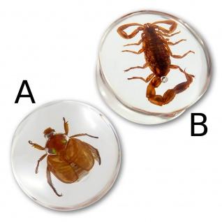 Acryl Bug Plug Skorpion Käfer ohr piercing horn scorpion flesh tunnel horn tube