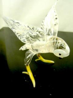 Polareule - Glastier