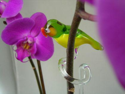 Orchideenstab Papagei 1-Parrot