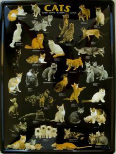 Cats Blechschild