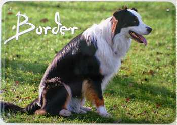 Blechpostkarte Hunde - Border - Vorschau