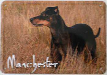 Blechpostkarte Hunde - Mancester