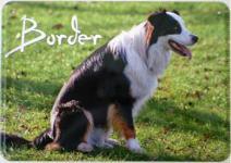 Blechpostkarte Hunde - Border