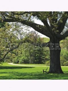 RSM-Rasensamen 7.1.1 Landschaftsrasen Standard 10kg , Grundpreis: 8.82 € pro 1 kg
