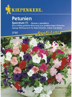 Petunia multiflora Petunien Spectrum Mischung vielblumig