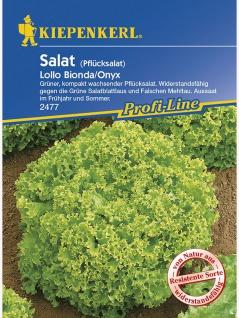 Salat Pflücksalat Lollo Biondo Onyx resistent