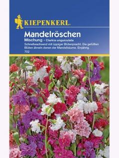 Clarkia unguiculata Mandelröschen-Mischung