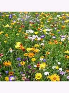 Landblumenmischung ein- und mehrjährige Mischung - Vorschau 3