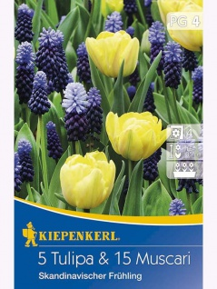 Blühende Partner Tulpen und Muscari-Mix Skandinavischer Frühling