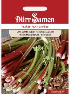 Rhabarber rot Rheum undulatum