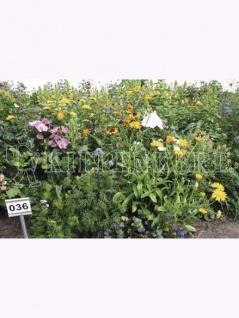 Schattenblumen-Mix ein- und mehrjährig Großpackung 100gr , Grundpreis: 339.00 € pro 1 kg