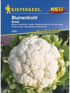 Blumenkohl Ballak