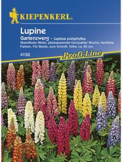 Lupinus polyphyllus Lupine Gartenzwerg niedrige Mischung