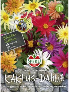 Kaktus Dahlien Sperli´s Dwarf Cactus Mix