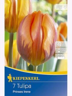 Einfache Frühe Tulpen Prinses Irene , Grundpreis: 0.51 € pro 1