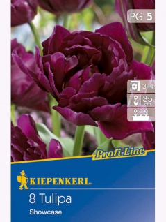 Profi-Line Tulipa Showcase, 8 Stück Blumenzwiebeln , Grundpreis: 0.50 € pro 1