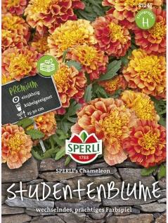 Tagetes Sperli's Chameleon Studentenblume