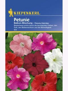 Petunia grandiflora Petunien Balkon-Mischung - Vorschau 1