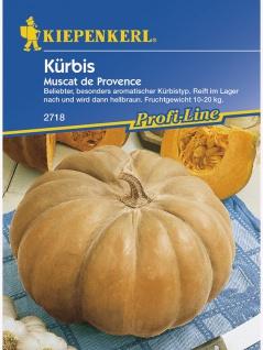 Kürbis Muskatkürbis Muscat de Provence