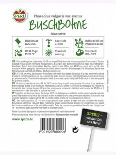 Buschbohne Mascotte - Vorschau 2