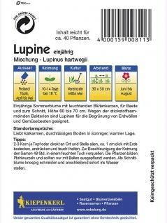 Lupinus hartwegii Lupinen einjährig Mischung - Vorschau 2