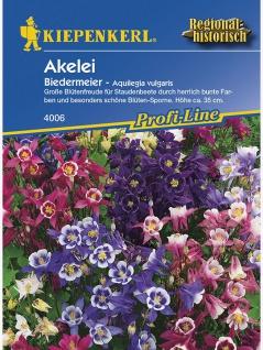 Aquilegia vulgaris Akelei Biedermeier