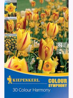 Mega- Pack Farbsymphonie Colour Harmony