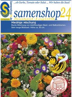 Sommerblumen Bienenfreund niedrige Mischung