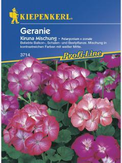 Pelargonium x zonale Geranien Kiruna Mischung