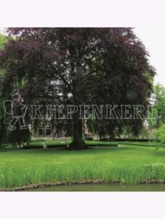RSM-Rasensamen 7.3.1 Landschaftsrasen Feuchtlagen 10kg , Grundpreis: 10.79 € pro 1 kg