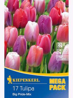 Mega- Pack Darwin-Hybrid-Tulpen Big Pride Mischung