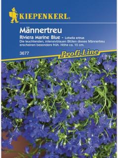 Lobelia erinus Männertreu Riviera Marine Blue