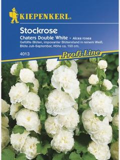 Alcea rosea Stockrosen Stockmalve Chaters Double White