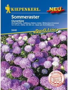 Sommeraster Ouvertüre (hellblau)