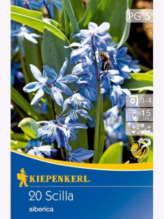 Scilla siberica (Blausternchen), 20 Stück Blumenzwiebeln , Grundpreis: 0.20 € pro 1