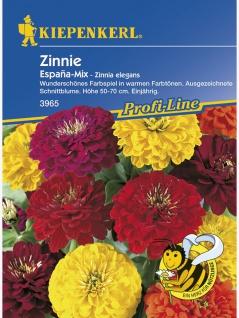 Zinnia Zinnie Espana Mix